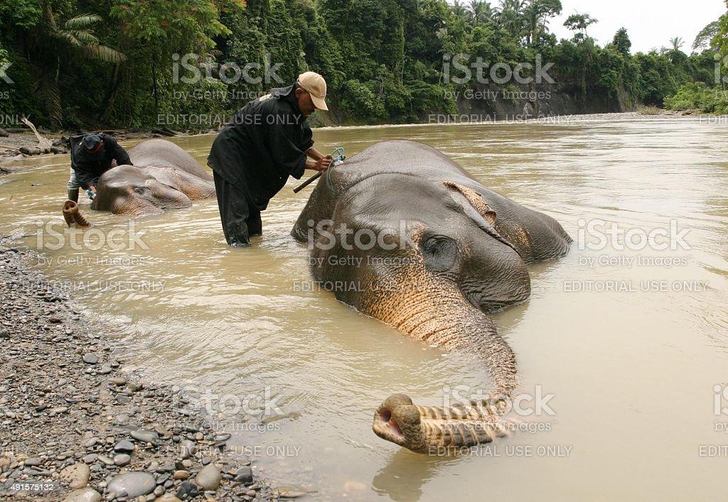 Elefantenführer Waschungen asiatischer Elefant im Fluss – Foto
