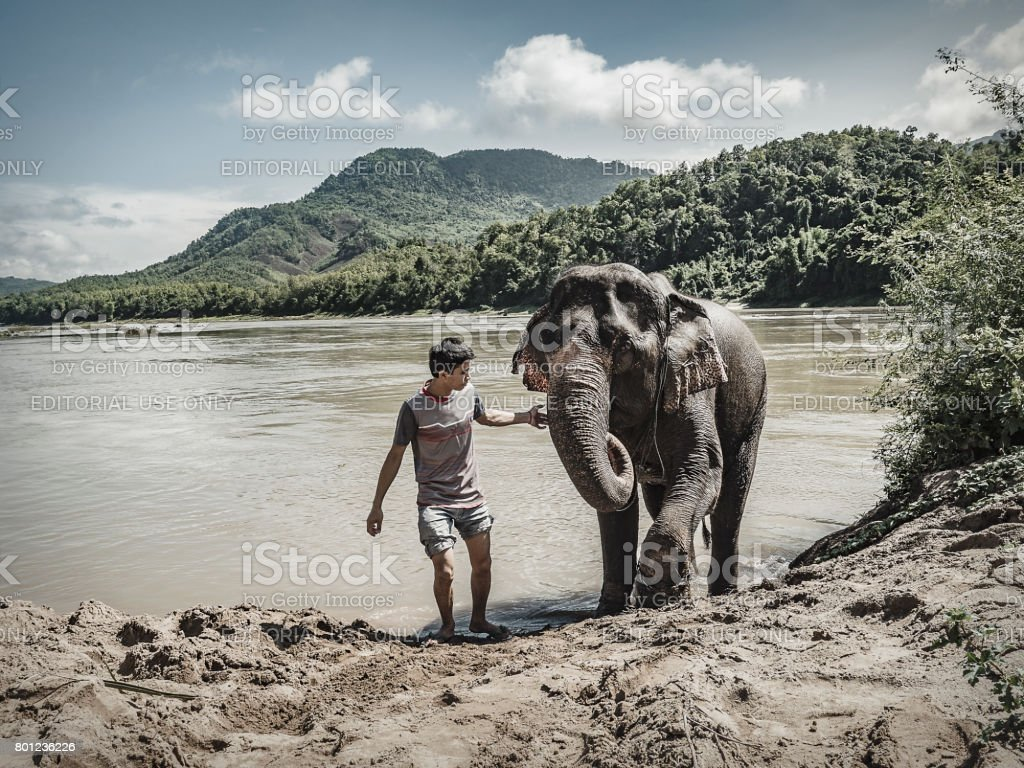 Mahout with elephant after bathing in the Mekong river Luang Prabang Laos stock photo