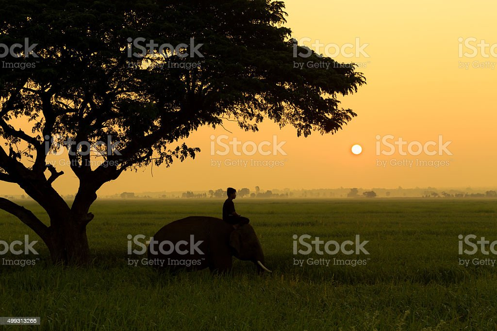 Mahout with elephant silhouette at sunrise stock photo