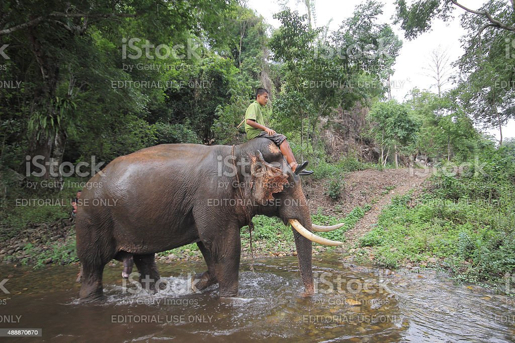 Mahout young boy and elephant stock photo