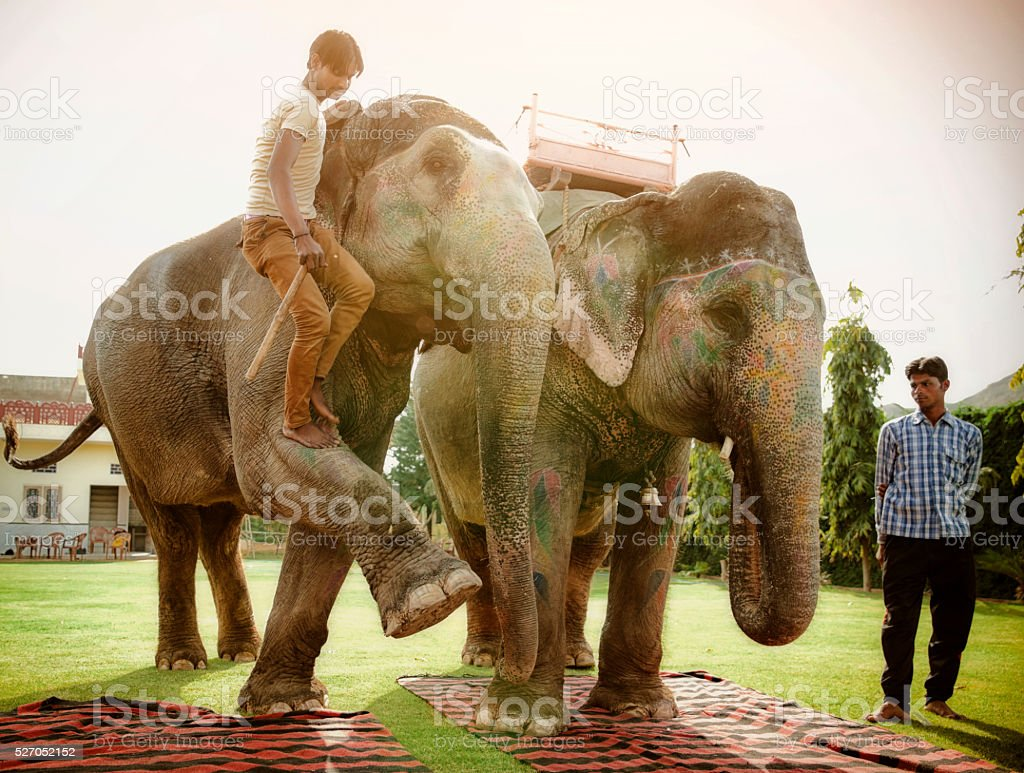 2 mahouts w their retired tourist elephants. stock photo