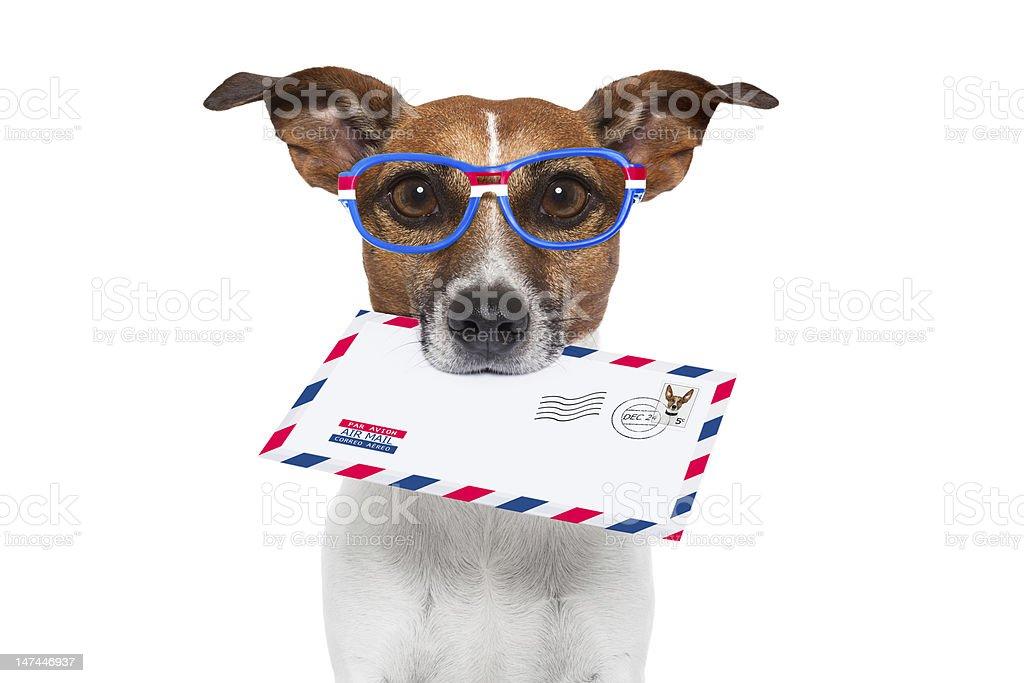 mail dog stock photo