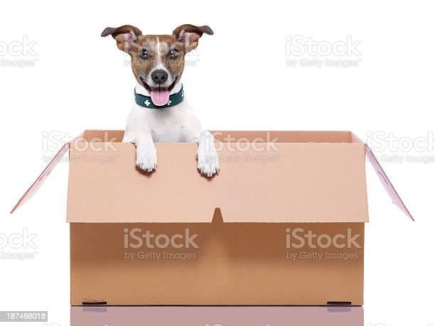 Mail moving box dog picture id187468018?b=1&k=6&m=187468018&s=612x612&h=obtw6zmyii9dktltzcs 7bs7lfxx6rokvuo8dw5dytm=