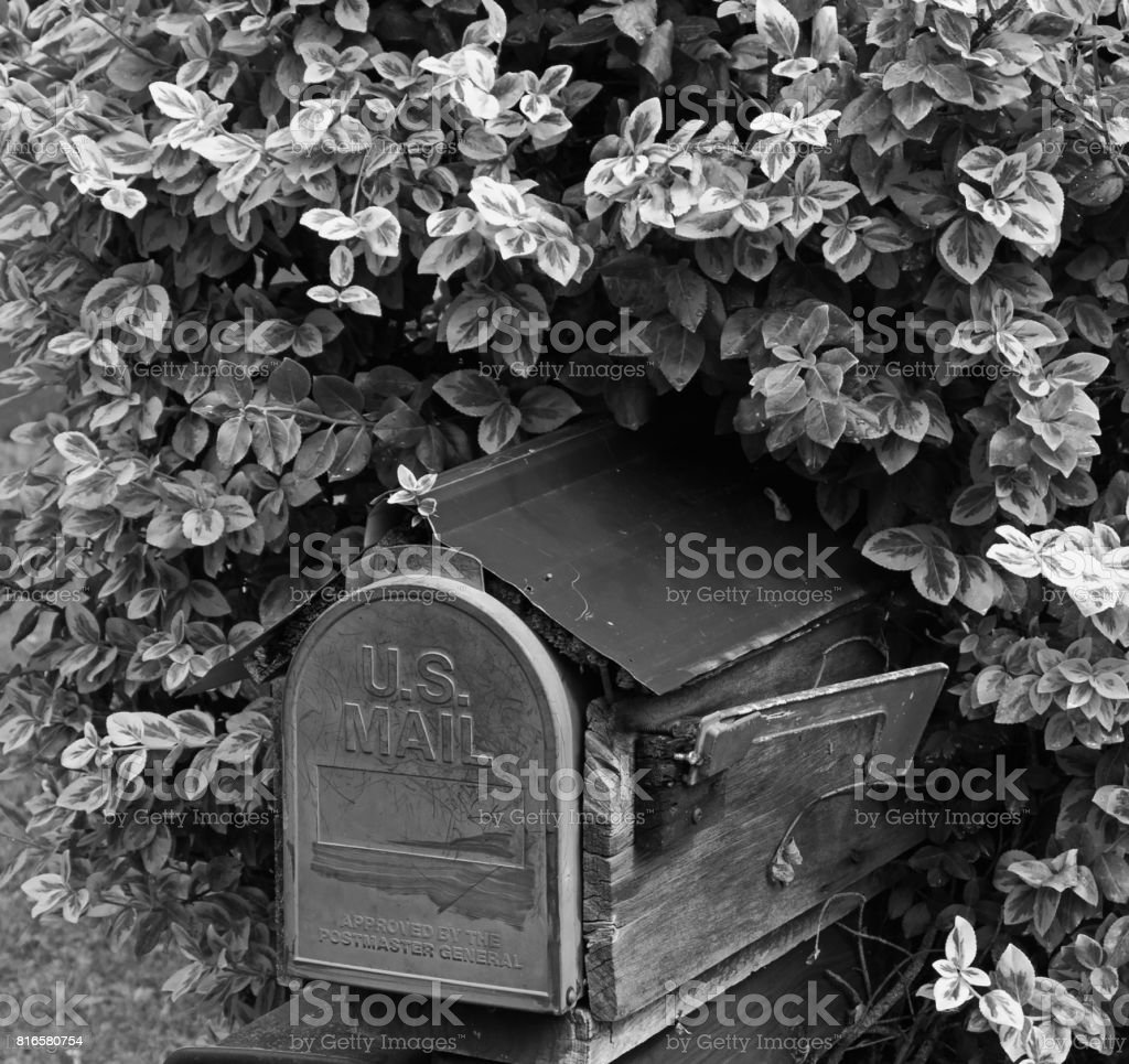 Mailbox in a Bush in the Rural Countryside stock photo