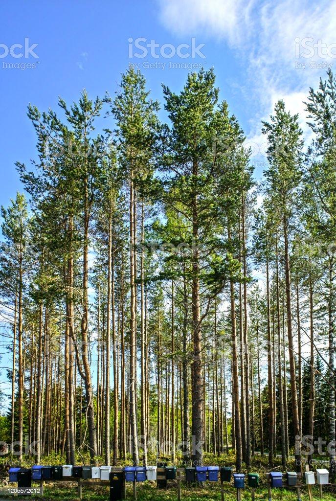 Briefkasten in Schweden - Lizenzfrei Baum Stock-Foto