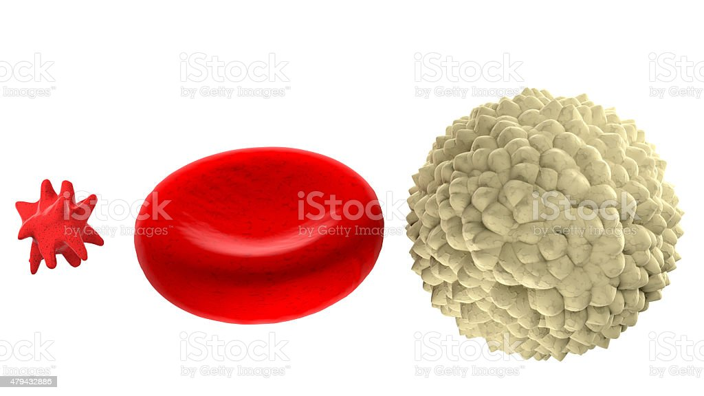 Main blood cells in scale isolated on white stock photo