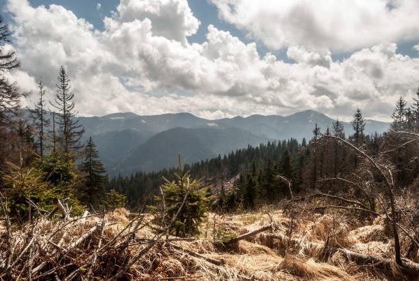 jarabina 언덕에서 슬로바키아에서 velka fatra의 주요 능선 산 - 벨리카 파트라 뉴스 사진 이미지