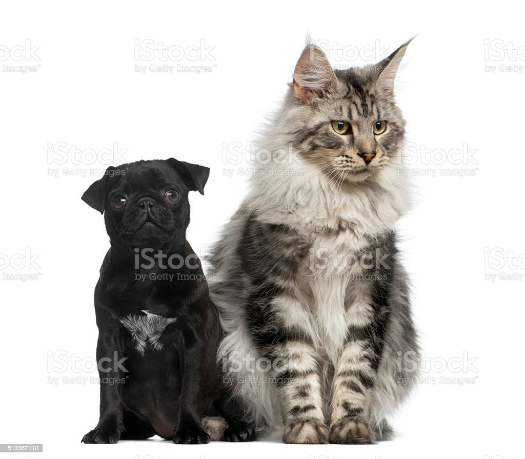 Cat Vs Dog Which Easier