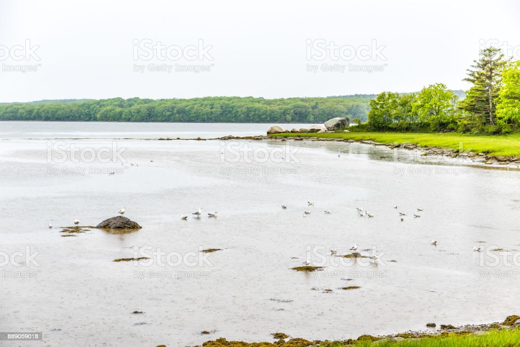 Maine empty harbor during rainy, cloudy weather with seagulls standing in shallow water stock photo