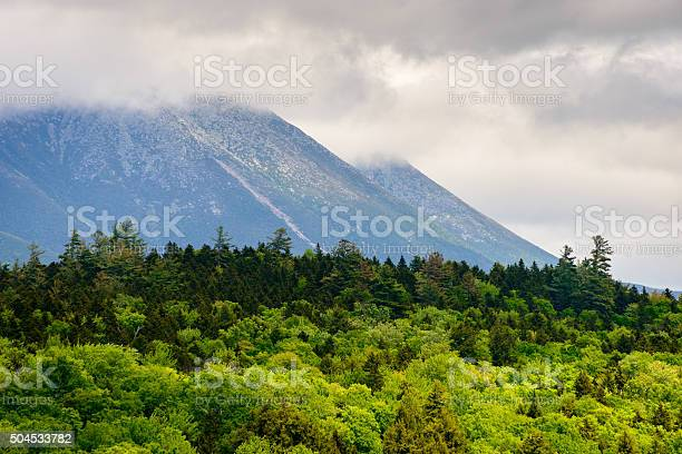 Maine North Woods Stock Photo - Download Image Now