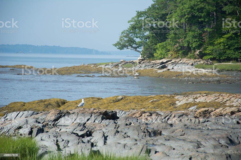 Maine tidal area stock photo