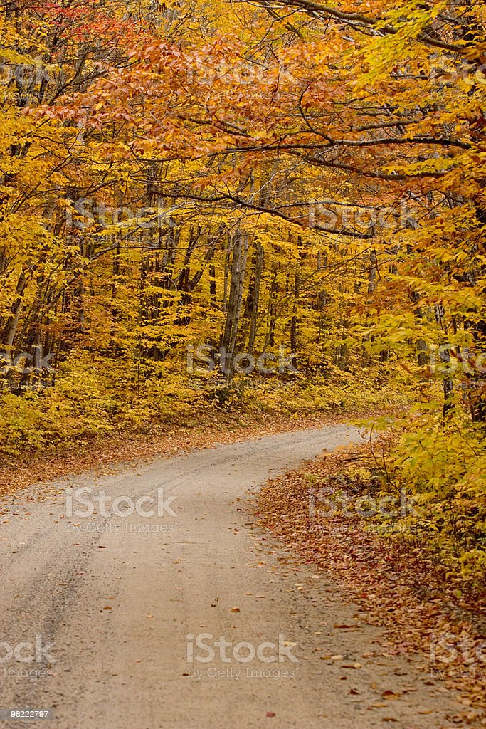 Maine woods road in autumn royalty-free stock photo