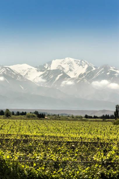 Maipu´s vineyards in the Mendoza wine region, Argentina. stock photo