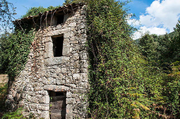 maison en ruine une vieille maison abandonnée en ruine est envahie par la végétation ruine stock pictures, royalty-free photos & images