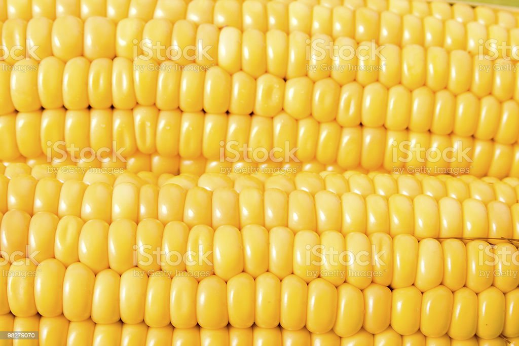 Maize close up royalty-free stock photo