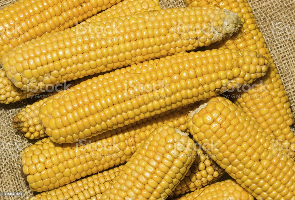 Maize ears royalty-free stock photo
