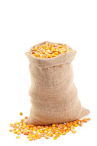 Maize in Burlap Sack stock photo