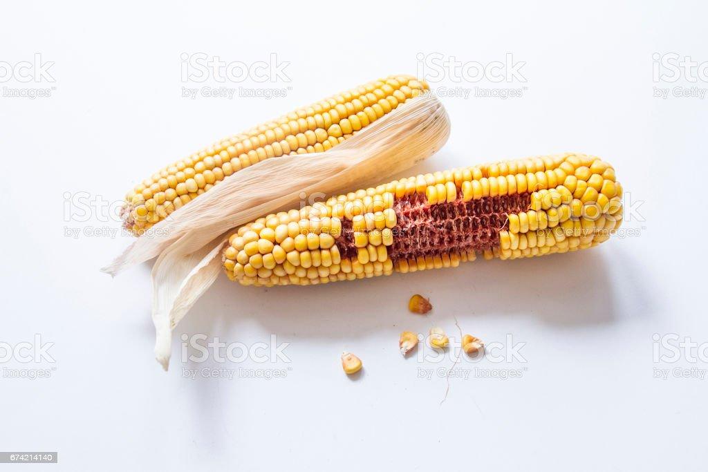 кукуруза stock photo