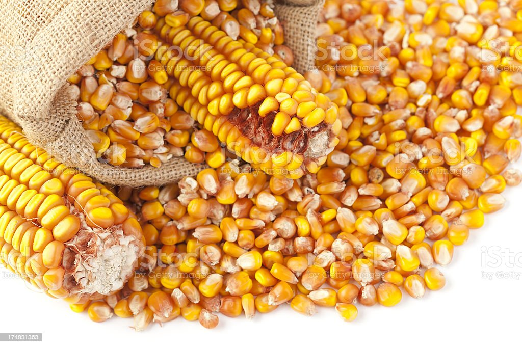 Maize Seeds with Sack royalty-free stock photo