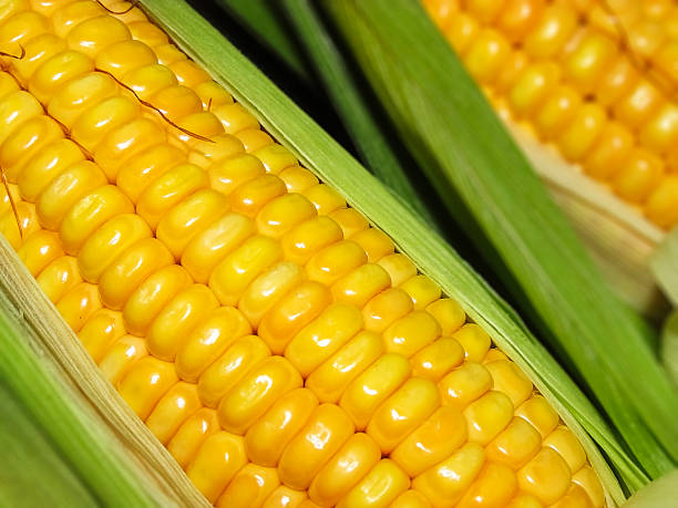 Maize the corn in Macro stock photo