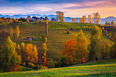 Wonderful autumn rural scenery and colorful deciduous trees on the slopes. Houses and gardens on the hill at sunset, Carpathians, Transylvania, Romania, Europe
