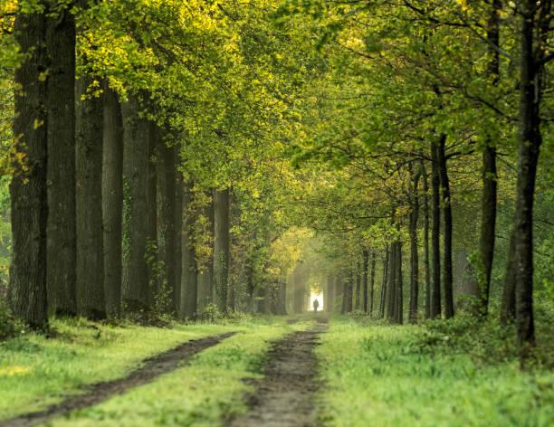 Majestic avenue in spring, Gelderland, The Netherlands stock photo
