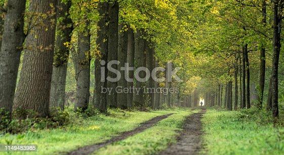 Majestic avenue in spring, Gelderland, The Netherlands