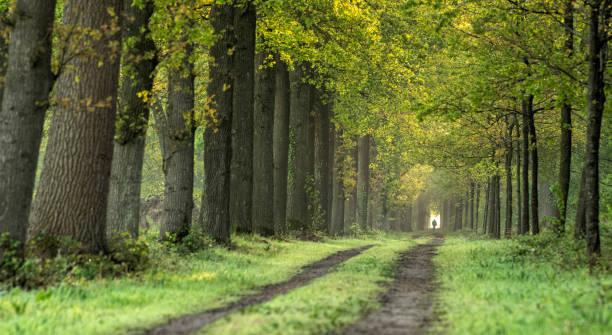 Majestätische Allee im Frühling, Gelderland, Niederlande – Foto