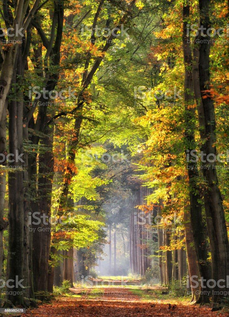 Majestätischen Alleen im Herbst Blatt Farben – Foto