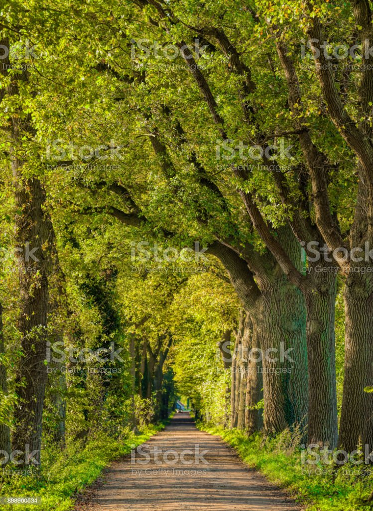 Majestic avenues in autumn leaf colors stock photo