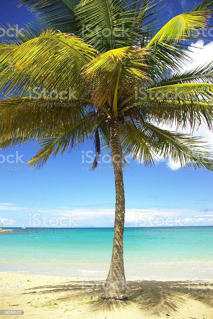 Majestoso coqueiro contra belas praias de águas turquesa do Caribe - Foto de stock de Atividade Recreativa royalty-free