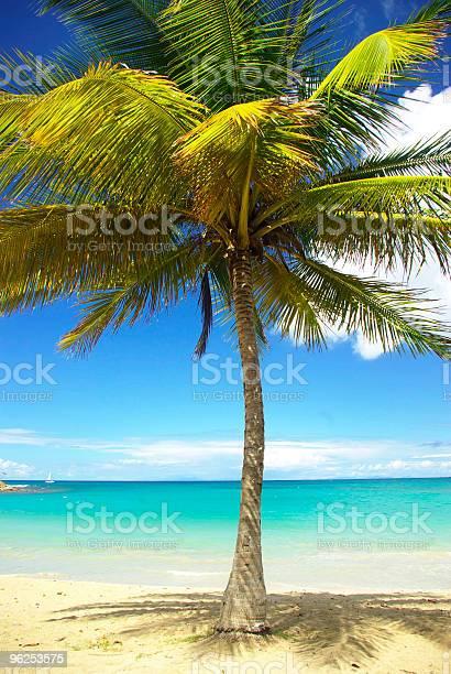 Foto de Majestoso Coqueiro Contra Belas Praias De Águas Turquesa Do Caribe e mais fotos de stock de Atividade Recreativa