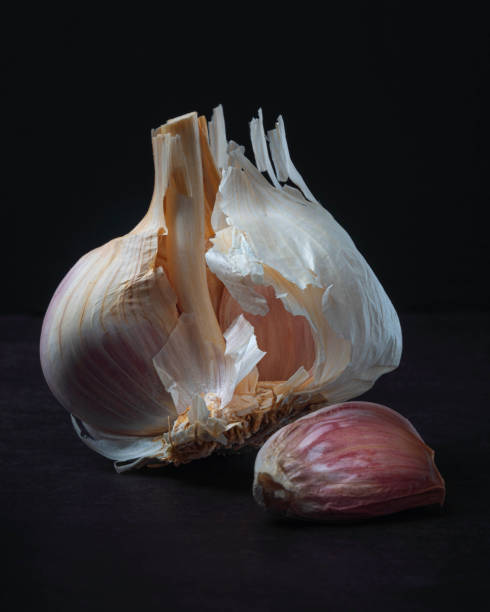 Majestic Garlic on Dark Background Still Life stock photo