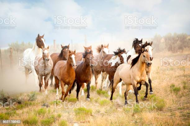 Majestic herd of wild horses running in the desert freedom bound away picture id865176640?b=1&k=6&m=865176640&s=612x612&h=pwhbjqqfilmpnzh19c29ejexz3rwripf49 gu6nqdye=
