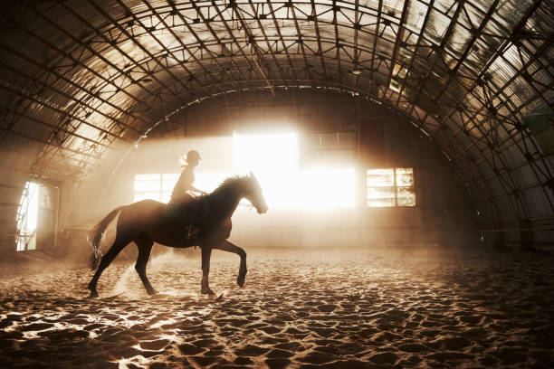 Majestic image of horse horse silhouette with rider on sunset the picture id1139890661?b=1&k=6&m=1139890661&s=612x612&w=0&h=n4pxdonup7x1todlakq qbiksfeiuzznvhgrjosj3lq=