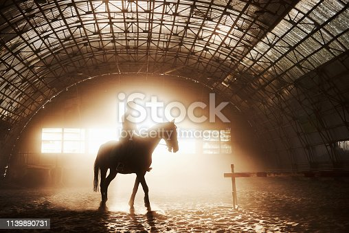 istock Majestic image of horse horse silhouette with rider on sunset background. The girl jockey on the back of a stallion rides in a hangar on a farm and jumps over the crossbar. The concept of riding 1139890731