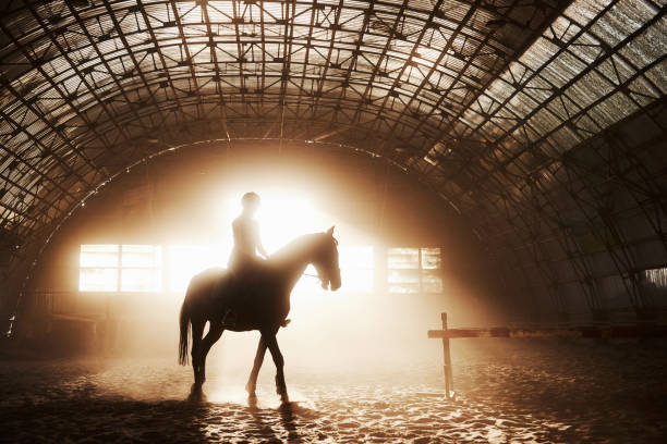 Majestic image of horse horse silhouette with rider on sunset the picture id1139890731?b=1&k=6&m=1139890731&s=612x612&w=0&h=yjj5oszc s5cpfgaaezlrygajclpo9dgsf2srihqfjo=