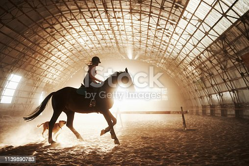 Majestic image of horse horse silhouette with rider on sunset background. The girl jockey on the back of a stallion rides in a hangar on a farm and jumps over the crossbar. The concept of riding.