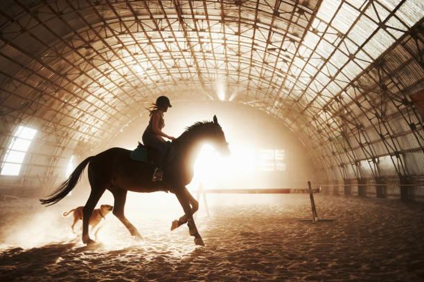 日没の背景にライダーと馬の馬のシルエットの雄大なイメージ。馬の背中の女の子騎手は、農場の格納庫に乗って、クロスバーの上にジャンプします。ライディングのコンセプト - 乗馬 ストックフォトと画像