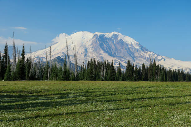 Majestoso Monte Rainier, visto a partir da trilha do Grand Park - foto de acervo