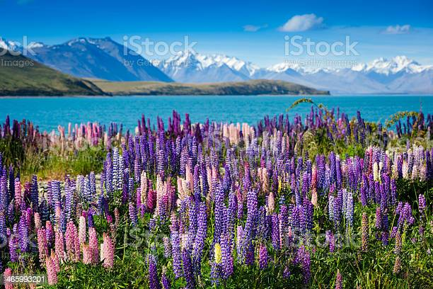 Photo of Majestic mountain lake with lupins blooming