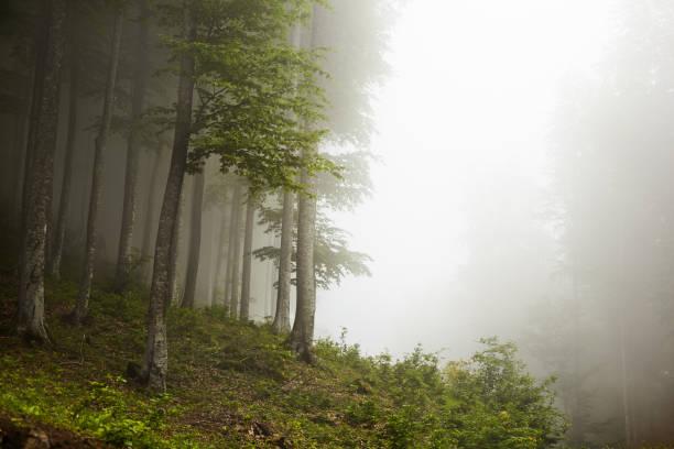 Blick auf die majestätischen Berge bei Nebel und Bäume – Foto