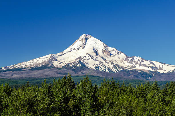 Majestic Mt. Hood Snow capped Mt. Hood rising high above a forest mt hood stock pictures, royalty-free photos & images