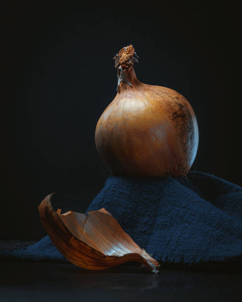 Majestic Onion Still Life on Dark Background stock photo