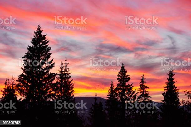 Photo of Majestic sky, pink cloud against the silhouettes of pine trees in the twilight time. Carpathians, Ukraine, Europe. Discover the world of beauty