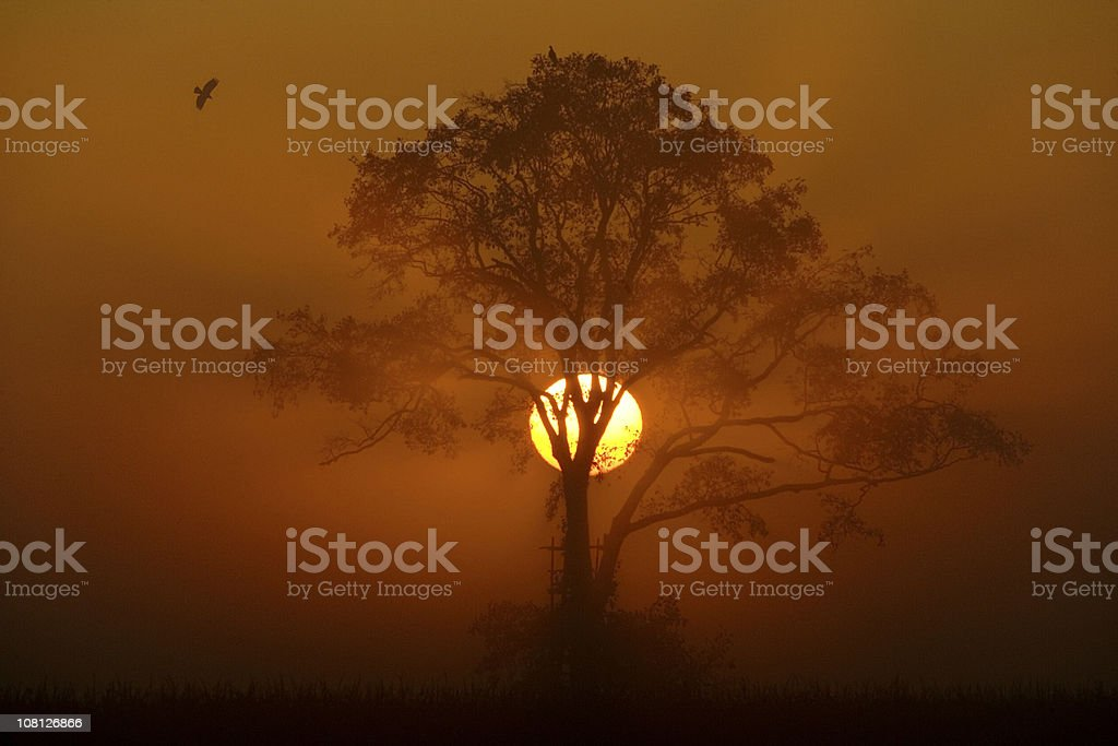 Majestic Sunrise Behind Tree Silhouette in Fog royalty-free stock photo