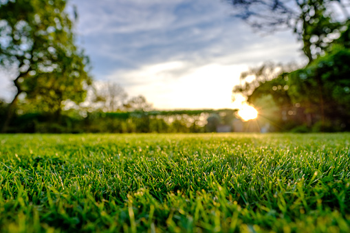 Majestic sunset seen in late spring, showing a recently cut and well maintained large lawn in a rural location. The sun can be seen setting below a distant hedge, producing a sunburst effect.