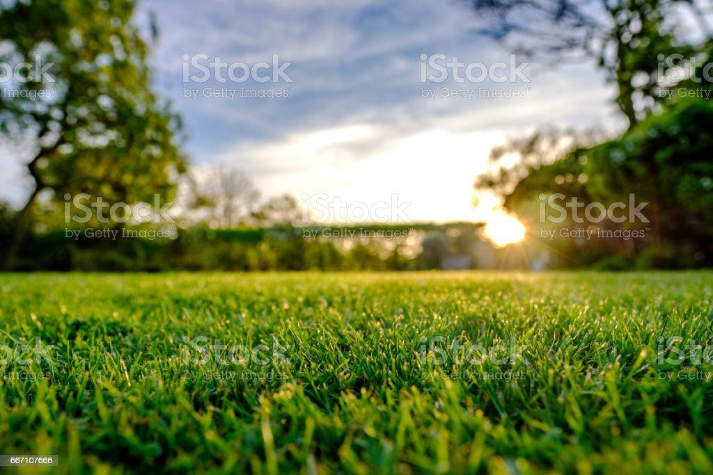 Majestoso pôr do sol visto no final da Primavera, mostrando um grande gramado recentemente cortado e bem conservado em um local rural. - foto de acervo