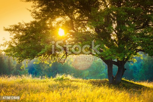 istock Majestic Tree against the Sunlight during Colorful Sunset 475812649