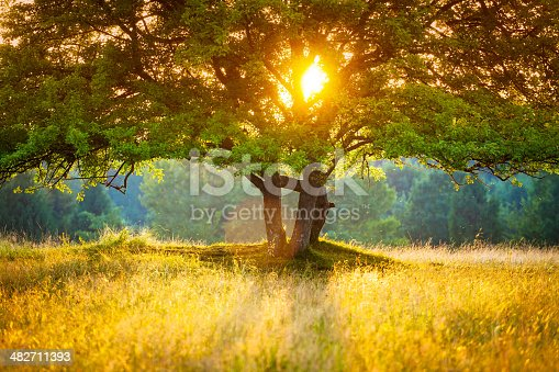 istock Majestic Tree against the Sunlight during Colorful Sunset 482711393